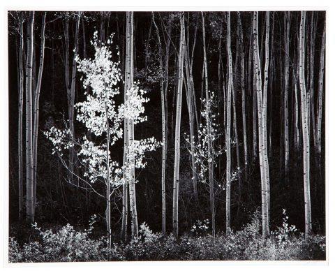 Ansel Adams: Beauty & Truth