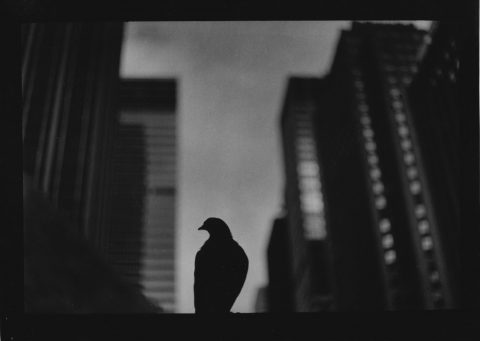 Giacomo Brunelli: New York
