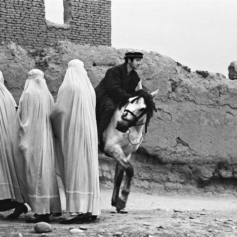 Three Burqas and Horse