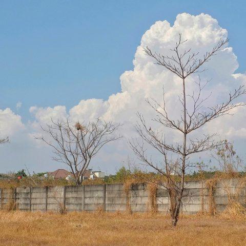 Cloud Trees