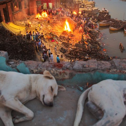 Stray dogs of Varanasi