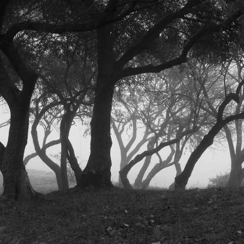 Contorted trees